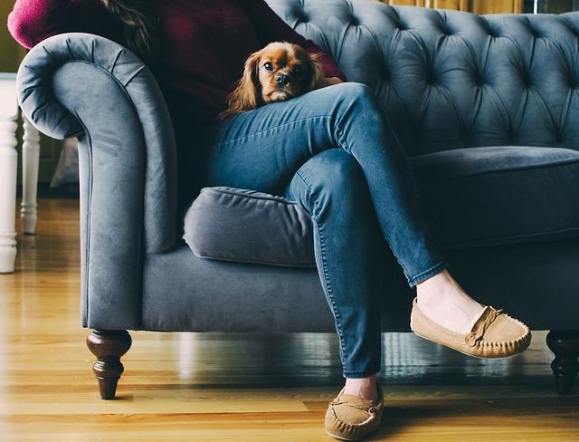 pes na klíně.jpg
