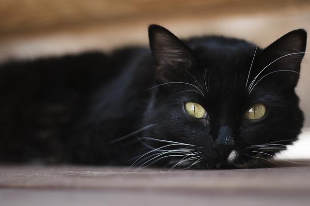 ochočená kočička