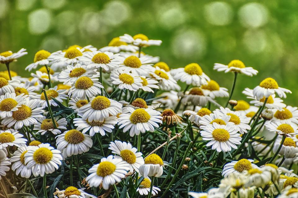 květiny na zahradě